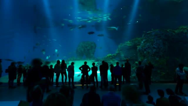 t/l den ba planet aquarium - aquarium stock videos and b-roll footage