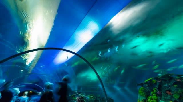 t/l den ba planet aquarium - kopenhagen stock-videos und b-roll-filmmaterial