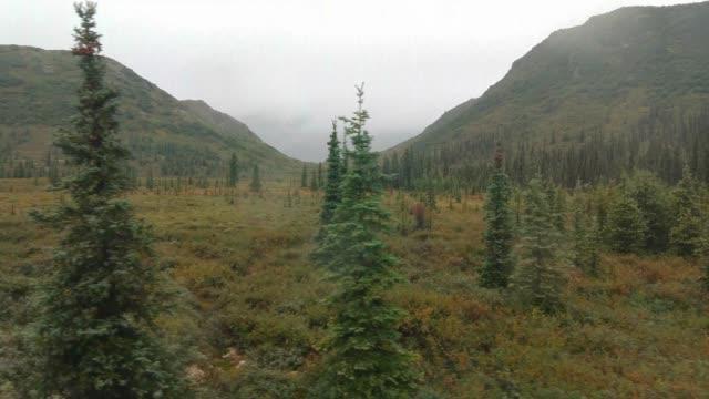 denali state park, alaska - denali national park stock videos & royalty-free footage