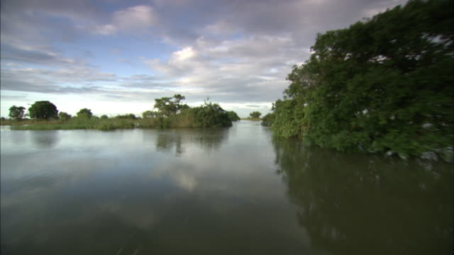 dense clumps of trees flank a swamp in cambodia. - backwater stock videos & royalty-free footage