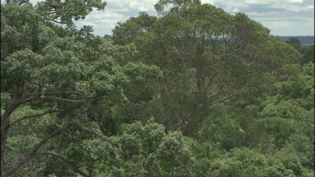 dense foliage typifies the amazon rainforest. - lush stock videos & royalty-free footage