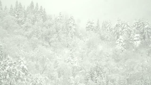 白川村で山脈の雪に覆われた鬱蒼とした森 - 雪が降る点の映像素材/bロール