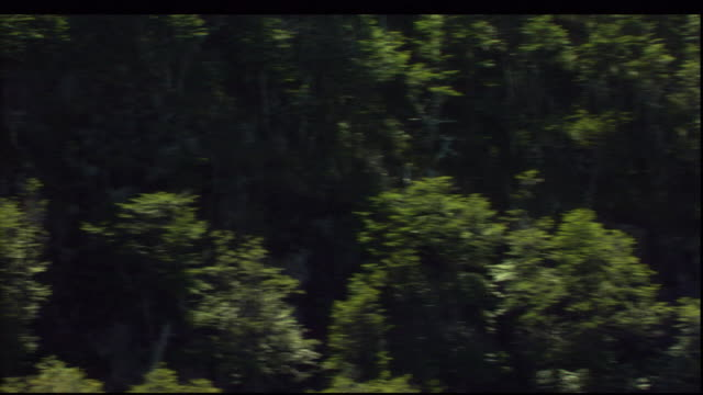 dense forest covers mountains in patagonia. - 梢点の映像素材/bロール