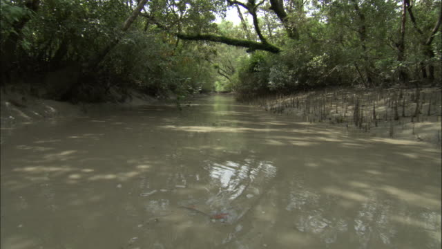 A dense forest flanks a muddy river. Available in HD.