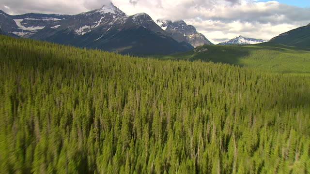 dense forest stretches to the peaks of the rocky mountains. - montagne rocciose video stock e b–roll