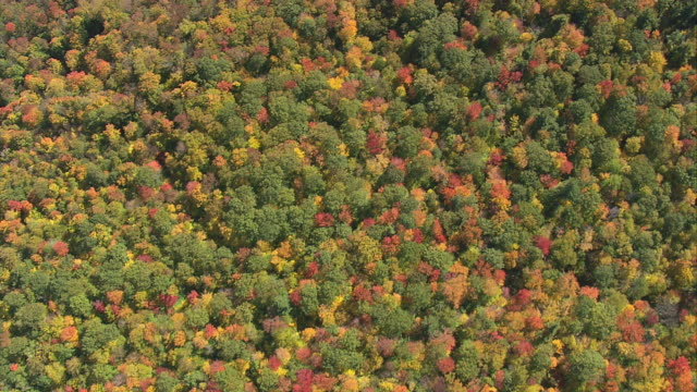 aerial dense forest with trees in rich autumn colors on rolling hillside / massachusetts, united states - massachusetts stock videos & royalty-free footage