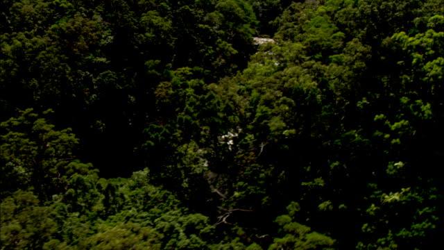 dense forests border the rock-filled daintree river in australia. - 生い茂る点の映像素材/bロール