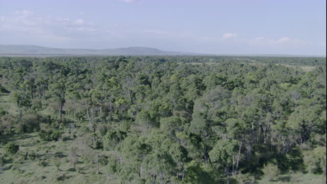 Dense forests cover the Masai Mara plains. Available in HD.