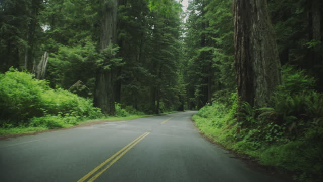dense forests tower over a road in redwood national park. - 主要道路点の映像素材/bロール