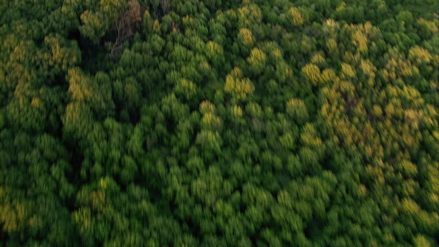 dense green trees form a canopy in a forest near chicago, illinois.` - chicago illinois stock videos & royalty-free footage
