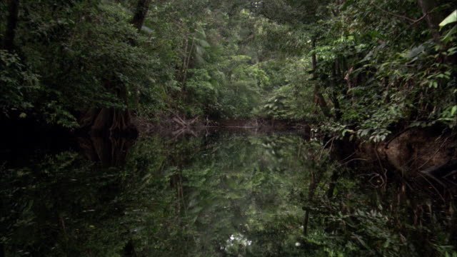 dense jungle vegetation lines the shores of a reflective river. - french guiana stock videos & royalty-free footage
