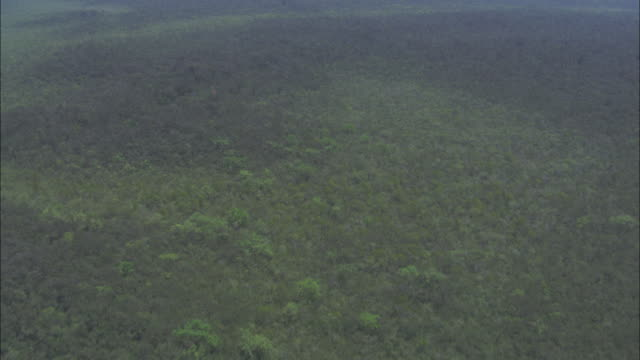 Dense mangrove forests cover the hillsides in Sundarbans Bangladesh. Available in HD.