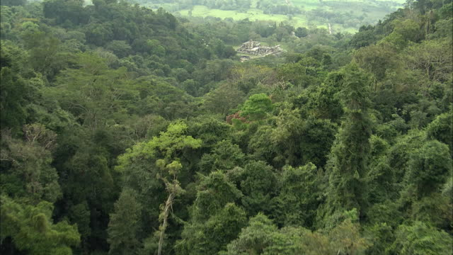 AERIAL Dense rainforest and Mayan ruins / Palenque, Chiapas, Mexico