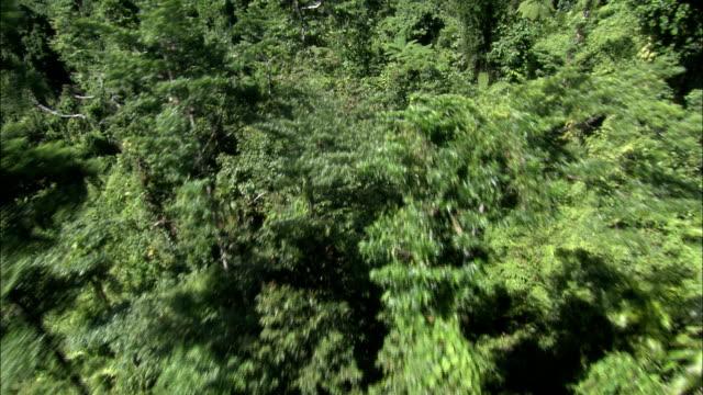vidéos et rushes de dense trees and other vegetation grows in queensland mountains. - cîme d'un arbre