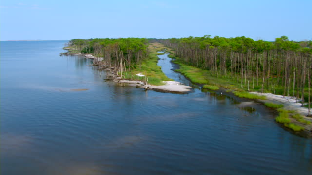 Dense trees line a coastal stream along the shores of Cat Island in Mississippi.