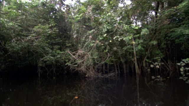 dense vegetation lines a river's shore in french guiana. - french guiana stock videos & royalty-free footage
