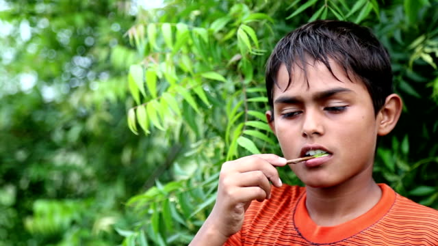 dental health using ayurveda - twig stock videos & royalty-free footage