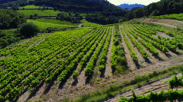 dentelles de montmirail vineyards, provence, france - ブドウ畑点の映像素材/bロール