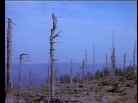 1990 MONTAGE Denude trees in Europe due to acid rain, AUDIO