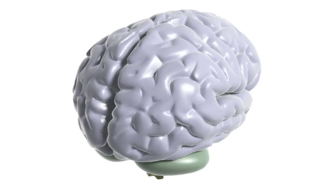 Depiction of the brain rotating while the left hemisphere fades down to reveal the internal anatomy including the pituitary gland, thalamus, corpus callosum and medulla oblongata.