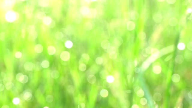 Depth of field blurred green grass with water drops. Defocused landscape background. Bokeh motion 4k UHD footage 3840x2160