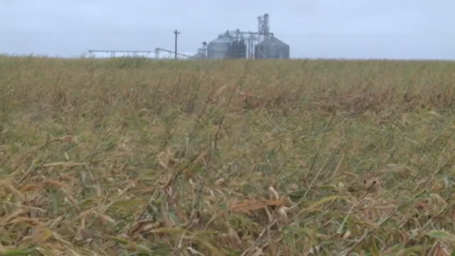 des moines, ia, u.s. - corn fields damaged by heavy rain on wednesday, september 9, 2020. the rainfall this week has been a drastic change for iowa... - damaged stock videos & royalty-free footage