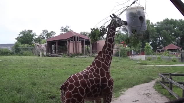 who des moines ia us entrance gate giraffes monkeys and rhinoceros at blank park zoo on monday july 6 2020 - tier in gefangenschaft stock-videos und b-roll-filmmaterial