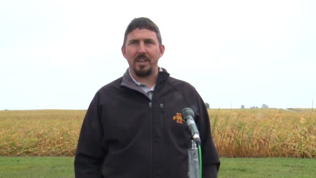 who des moines ia us mark licht iowa state university assistant professor speaks about the corn and soybean fields damage caused by heavy rain on... - licht stock videos & royalty-free footage