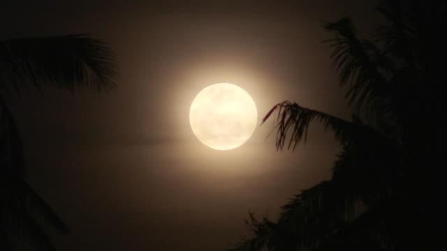 des philippins s'abritant du volcan en eruption mayon profitent de la super lune qui a brille au dessus du cratère fumant mercredi - astronomie stock videos & royalty-free footage