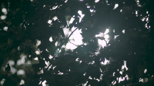 desaturated, low-angle view of sunlight coming through a london plane tree, uk. - foglia video stock e b–roll