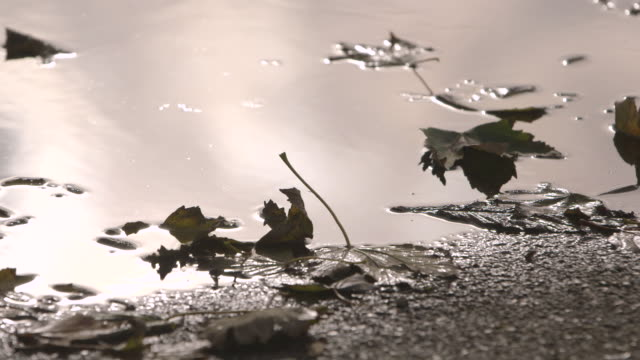 Desaturated view of leaves in a puddle