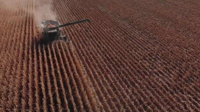 descending aerial drone shot of a combine harvester with an auger driving through a field of corn at harvest - harvesting stock videos & royalty-free footage