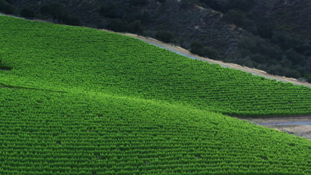 descending drone shot of vineyards in santa lucia highlands after sunset - monterey county stock videos and b-roll footage