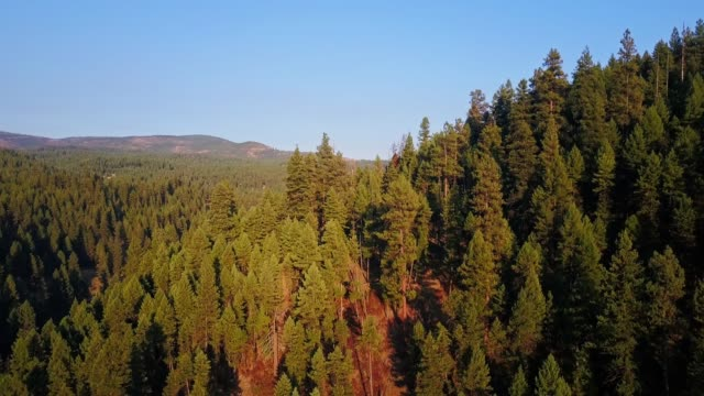 descending drone shot on bridge creek wildlife area , oregon - pacific northwest usa stock videos & royalty-free footage