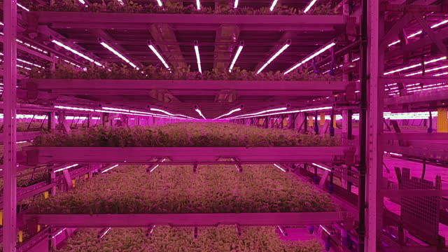 descending forklift point of view of hydroponic environment - less than 10 seconds stock videos & royalty-free footage