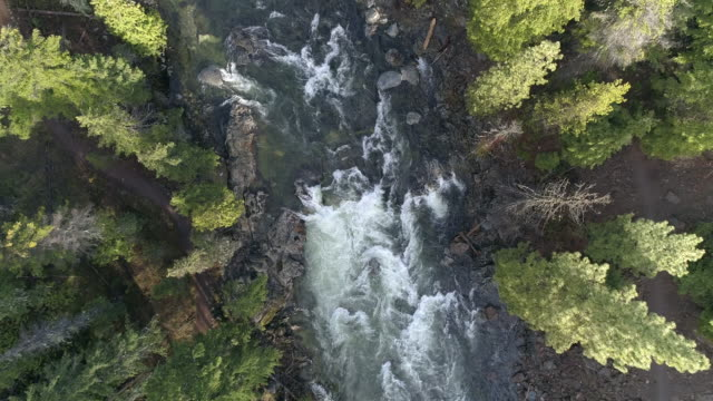 descending on a river passing through a lush forest - pacific northwest usa stock videos & royalty-free footage