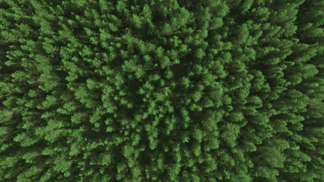 descending over a forest - coniferous stock videos & royalty-free footage