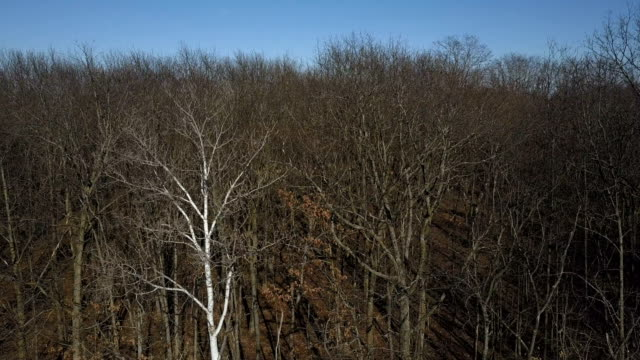 descending shot of dry leafless treetops - bare tree stock videos & royalty-free footage