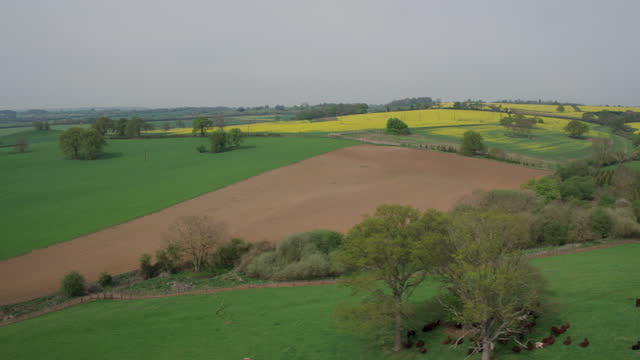 descending shot of fields with cattle - grazing stock videos & royalty-free footage