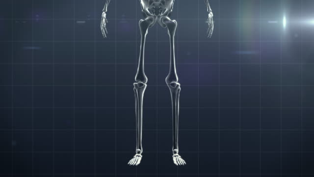 description of human bones - bone stock videos & royalty-free footage