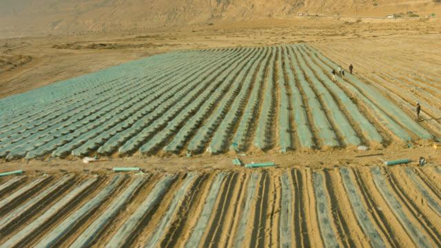 Desert Agricultural field Aerial shot