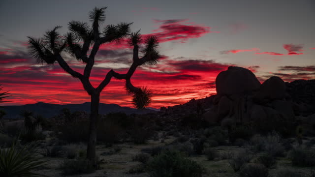 vídeos de stock e filmes b-roll de time lapse: desert at sunrise - joshua tree national park, california - cato