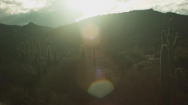 vídeos y material grabado en eventos de stock de desert cacti at sunset - cactus saguaro