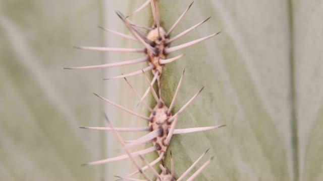 Desert Cactus Macro - Arizona USA