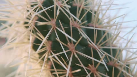 desert cactus macro - arizona usa - succulent plant stock videos & royalty-free footage