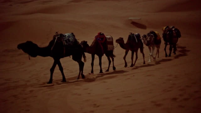 desert caravan. camels - desert stock videos & royalty-free footage