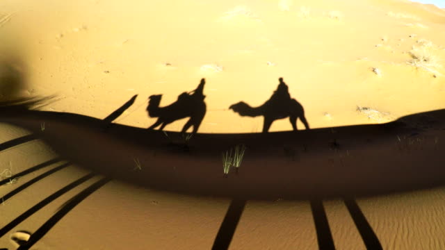 desert caravan casting a shadow - camel stock videos & royalty-free footage