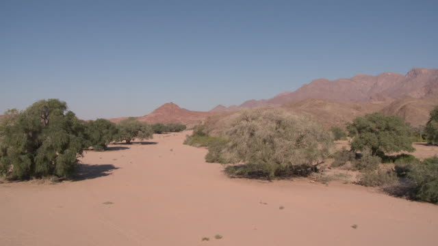 desert elephant (loxodonta africana) habitat, ugab river basin, namibia: desert-dwelling population of african bush elephant though not distinct subspecies - 厚皮動物点の映像素材/bロール