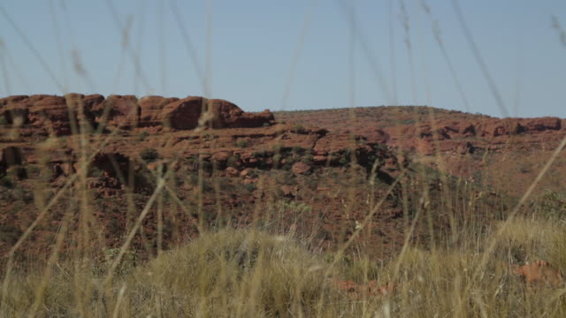 desert grass and dry sandstones, australia outback - northern territory australia stock videos & royalty-free footage