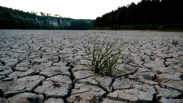 vídeos y material grabado en eventos de stock de grietas de tierra del desierto y un montón de pasto verde de crecimiento. - erosionado